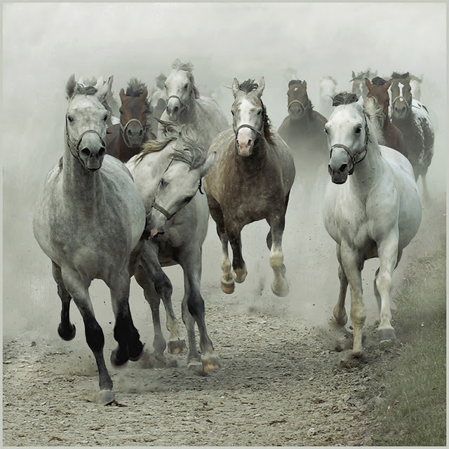 The_flock_-_wojtek_kwiatkowski